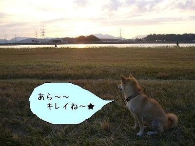 Photo_181